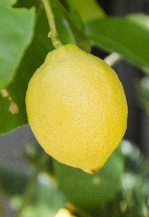 lemon20.jpg